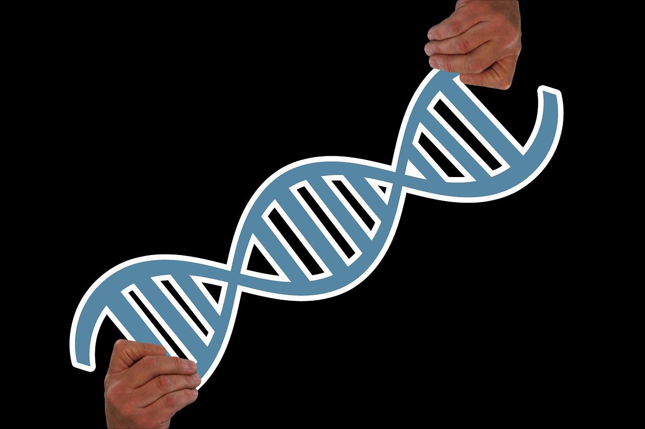 Was sagt ein Gen, wenn es auf ein anderes trifft?